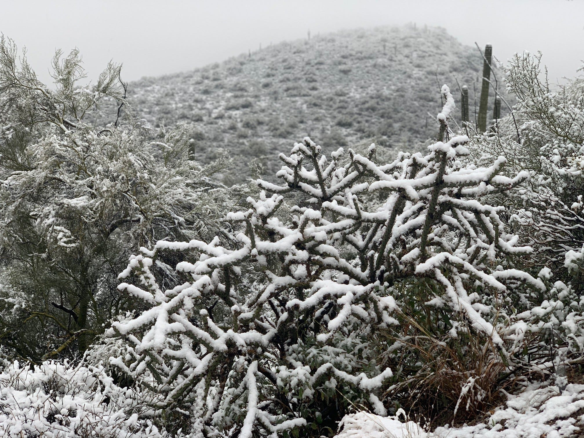 Snow dusts the desert landscape at Tucson's Tumamoc Hill park on Feb. 22, 2019.