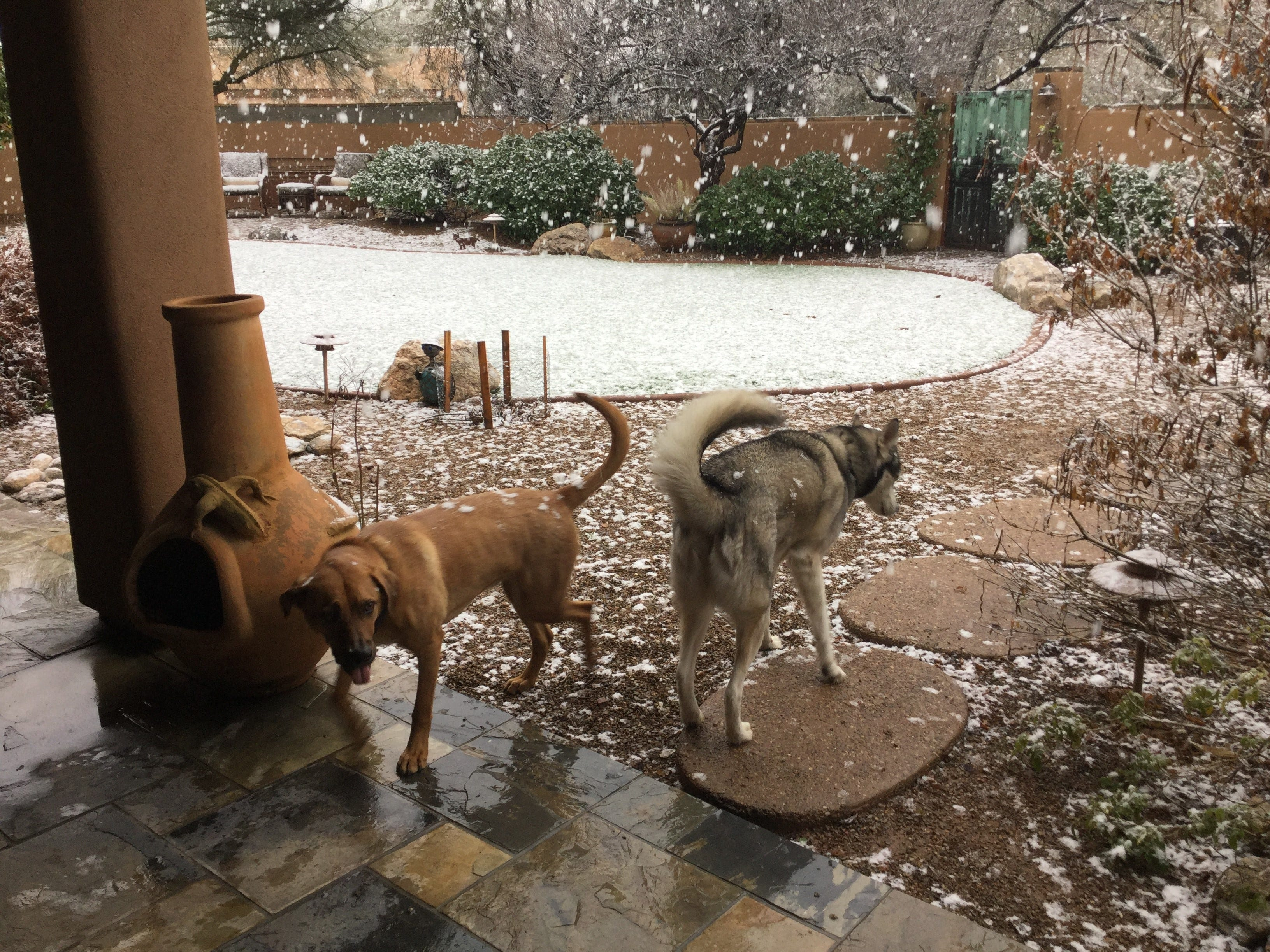 Republic photographer Sean Logan's family sent photos of the snow falling in Tucson on Feb. 22, 2019.