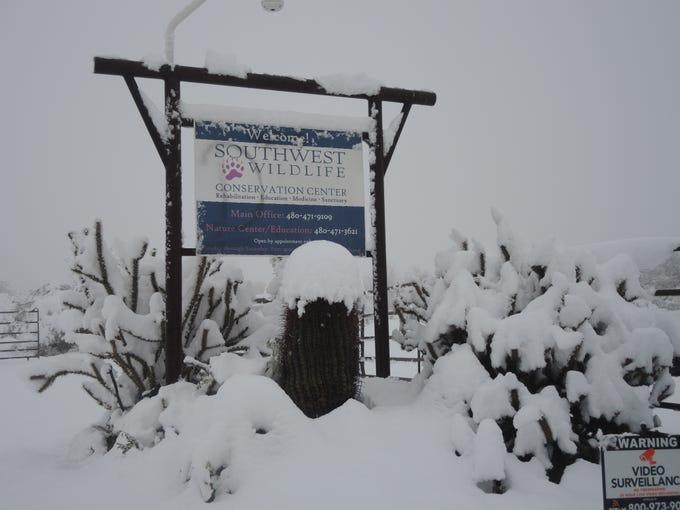 Snow outside Southwest Wildlife Conservation Center