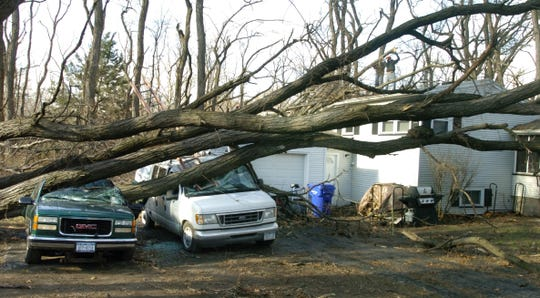 Trees downed on Stony Point Road in Webster by a windstorm on Jan. 9, 2008.