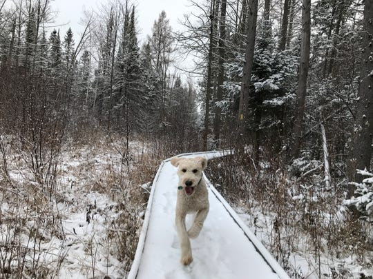 Henry the happy runner loves Wisconsin's Ice Age Trail.