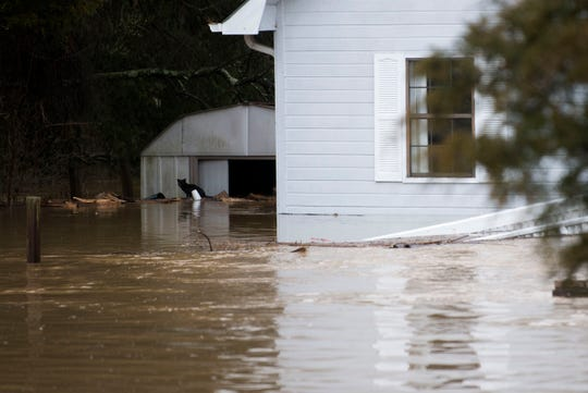 A cat looks for higher ground as Boyd's Creek floods Payne School Drive in Boyds Creek, Saturday, Feb. 23, 2019.