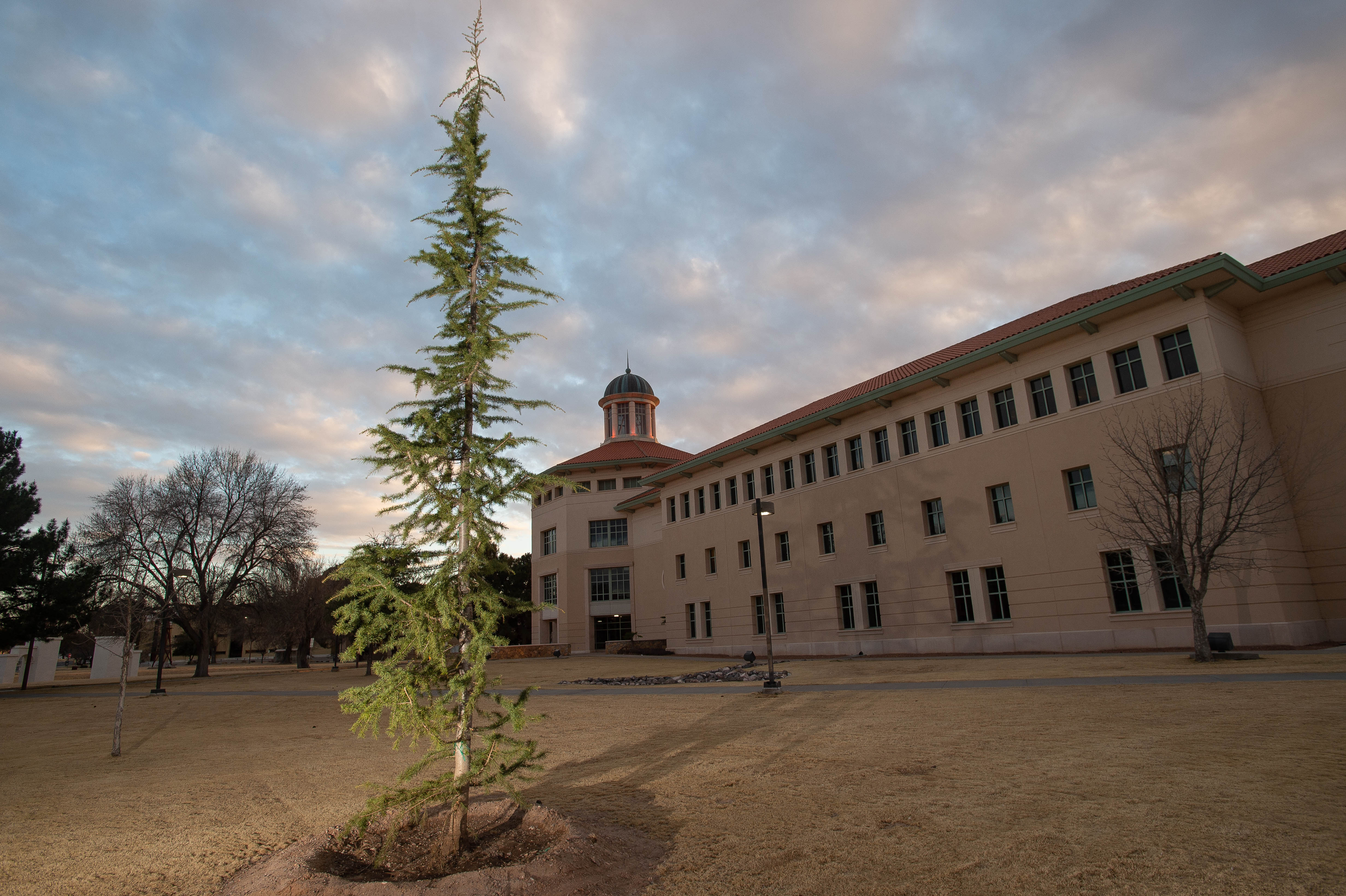 Couple donates 12 trees to NMSU campus to honor storytellers of the area | Las Cruces Sun