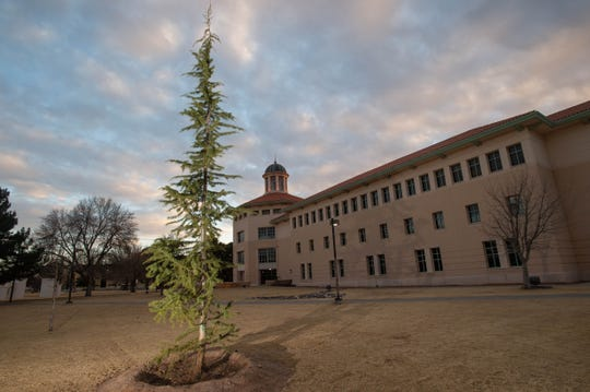 """Randy and Cindy Farmer purchased 12 Cedars of Lebanon trees — including this one outside Skeen Hall — to be planted around New Mexico State University's campus, after being inspired by the book """"The Giving Tree."""""""