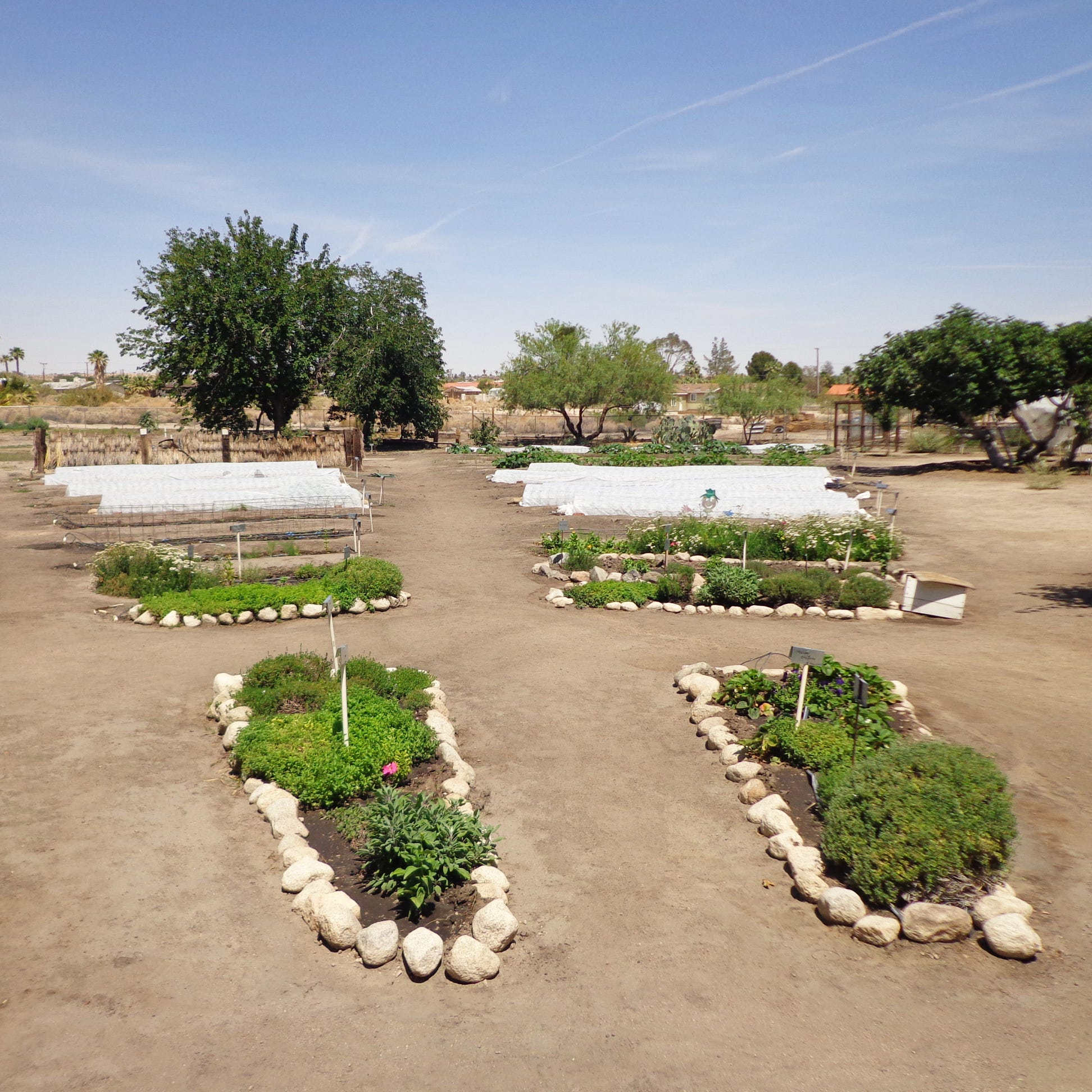 Just minutes from Joshua Tree, this farm is a model for winter vegetable gardens