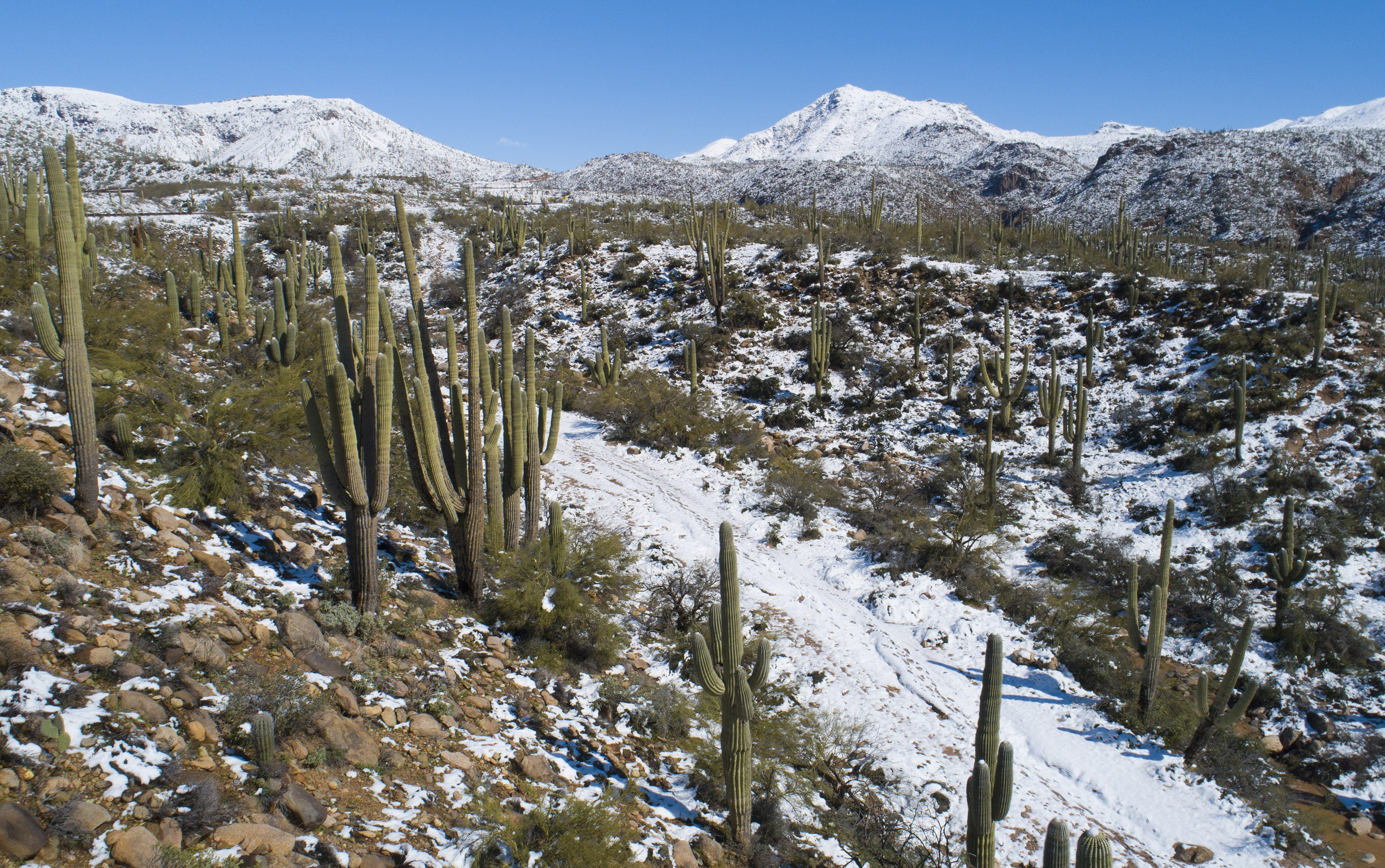 Winter's wallop: Snow, rain leave their mark, but next week will bring a different story | Arizona Central