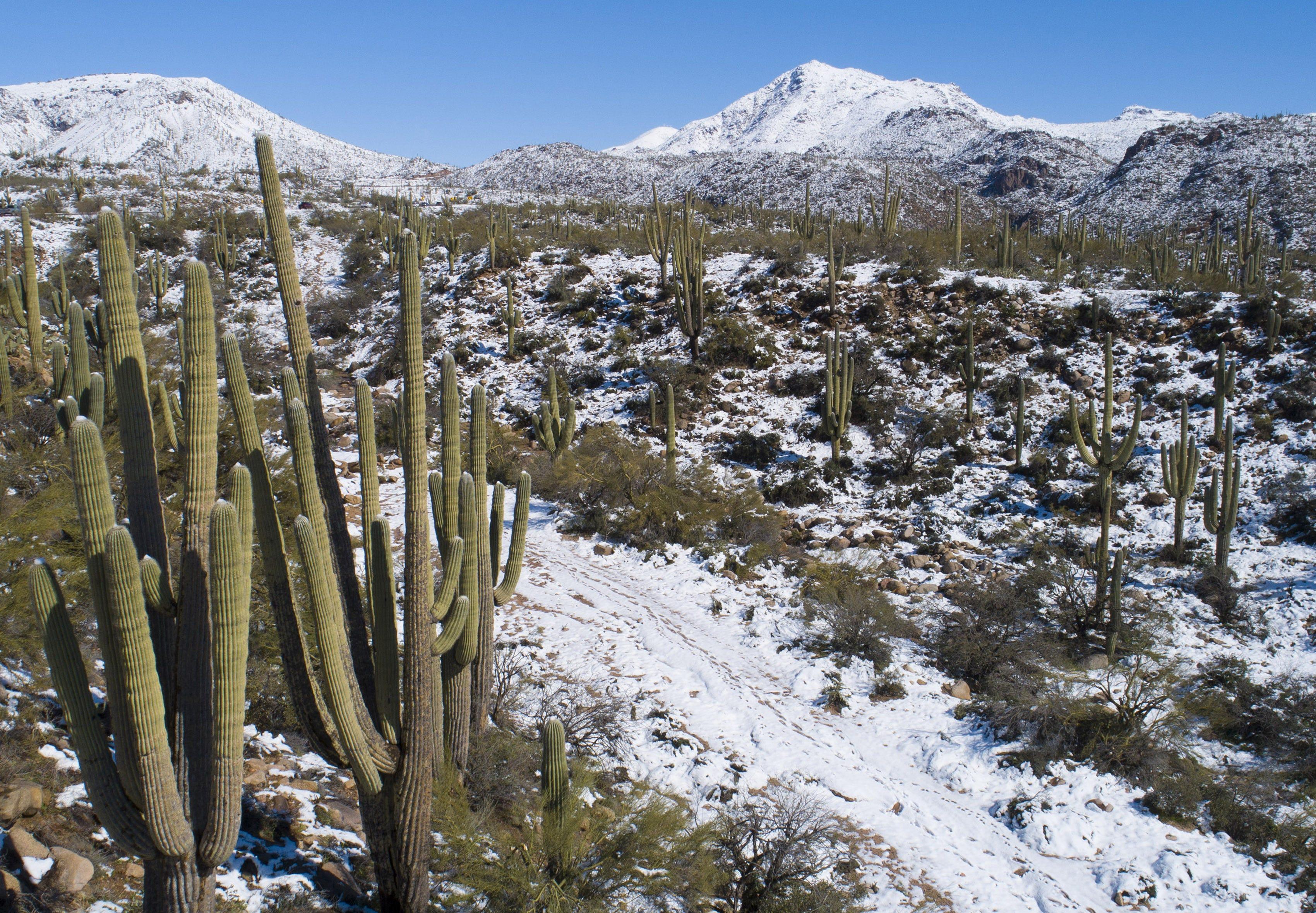 Hoodies Sweatshirt/Autumn Winter Saguaro,Blooming Brittlebush Superstition Wilderness by The Mountain Phoenix View,Orange and Brown Sweatshirt Blanket Throw
