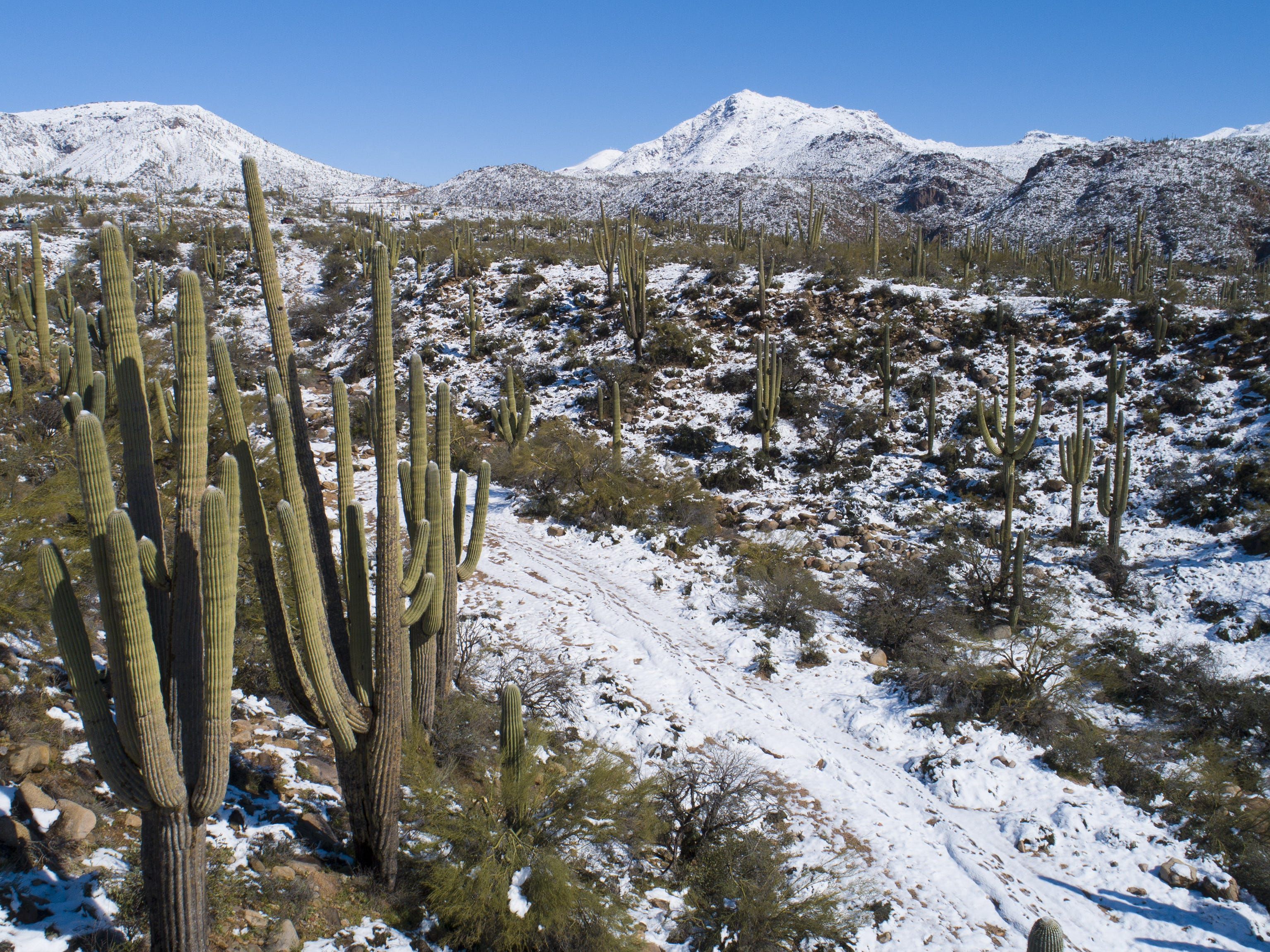 Snow covers the desert in the Tonto National Forest near Sunflower, Ariz. Feb. 23, 2019.