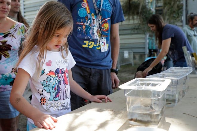 Iris Lindskog, 6, looks at tadpoles. Hundreds attend the MagLab open house to learn about science, Saturday Feb. 23, 2019.