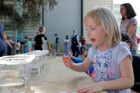 Haylee Outz, 5, waves to tadpoles. Hundreds attend the MagLab open house to learn about science, Saturday Feb. 23, 2019.