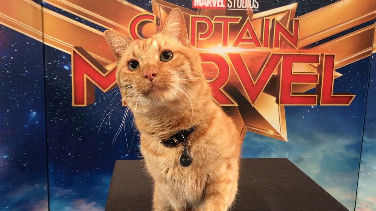 Captain Marvel': 5 things you need to know about Goose the Cat