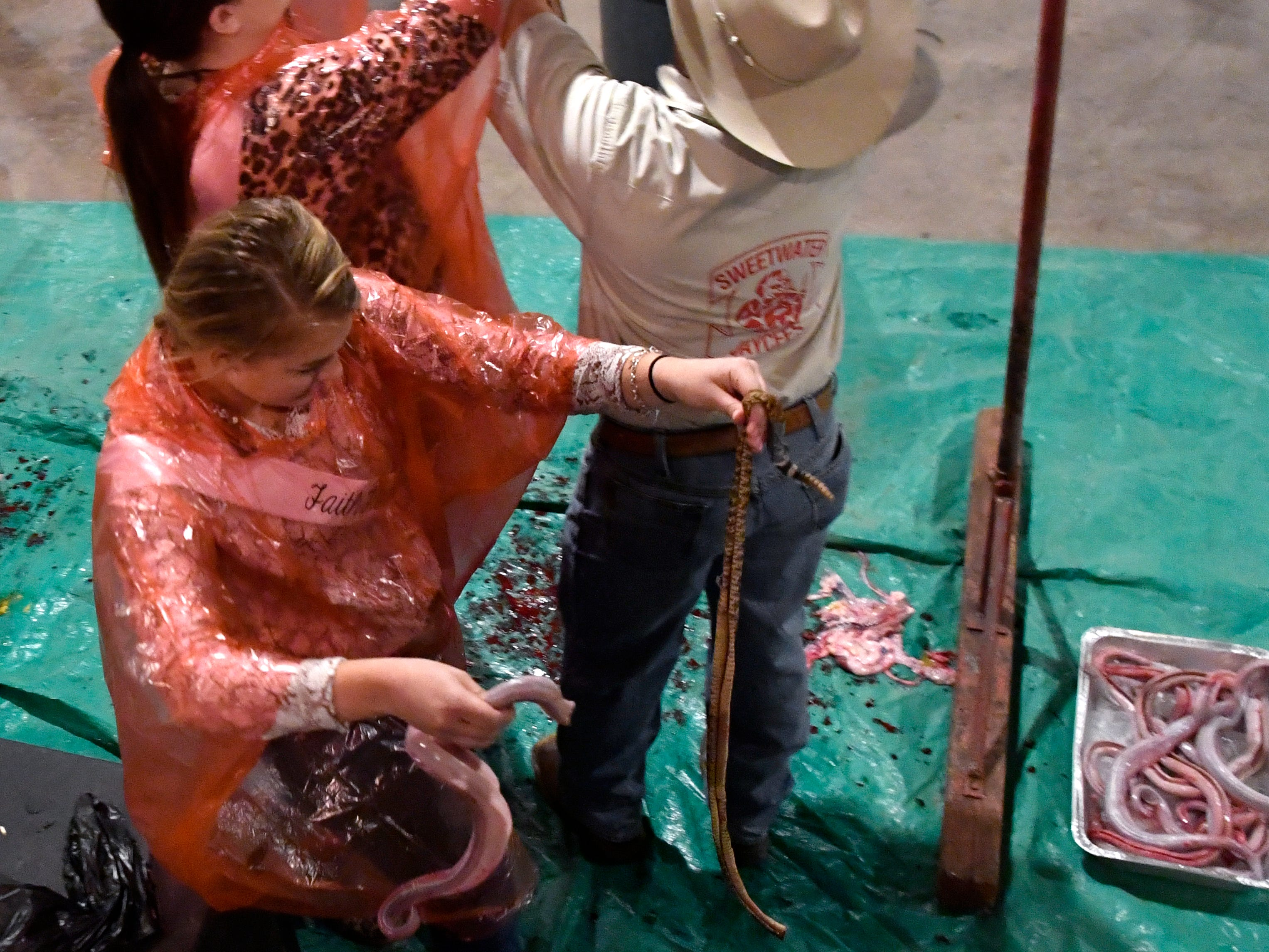 Lily Smola, a junior at Sweetwater High School, carries her skinned rattlesnake away from the pit set up in the Jaycees Barn in Sweetwater Friday Feb. 22, 2019. Behind her, Samatha Jones, a senior at Sweetwater High, is assisted by Cesar Ortiz in cutting down her snake. Media Day introduces the Big Country to this year's Miss Snake Charmer contestants. The pageant will be March 7, followed by the World's Largest Rattlesnake Roundup March 8-10.