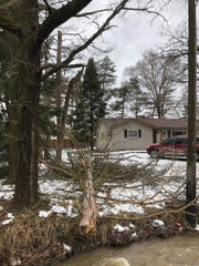 High winds knocked down this  tree in the yard of a home on Collins Road in Rochester Hills Sunday morning.