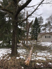 A tree came down in a Rochester Hills yard on the morning of Sunday, Feb. 24, 2019.