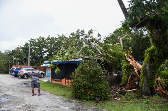 Merizo Mayor Ernest T. Chargualaf shows the lemai tree that fell on his home in the aftermath of super Typhoon Wutip, Feb. 24, 2019.