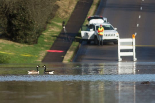 Geese float in standing water as flooding continues on South Peters and Ebenezer Road in West Knoxville Sunday, Feb. 24, 2019.