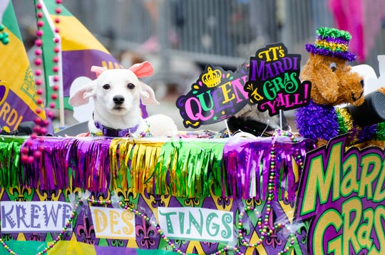 A dogs-only Mardi Gras parade event is scheduled to begin Saturday at noon in South City Park.