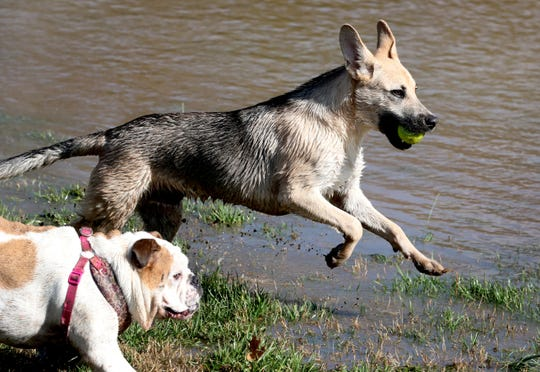 La Vergne dog owners may soon be able to let their canine pals off their leashes in a new dog park, thanks to a $25,000 grant from the Boyd Foundation.