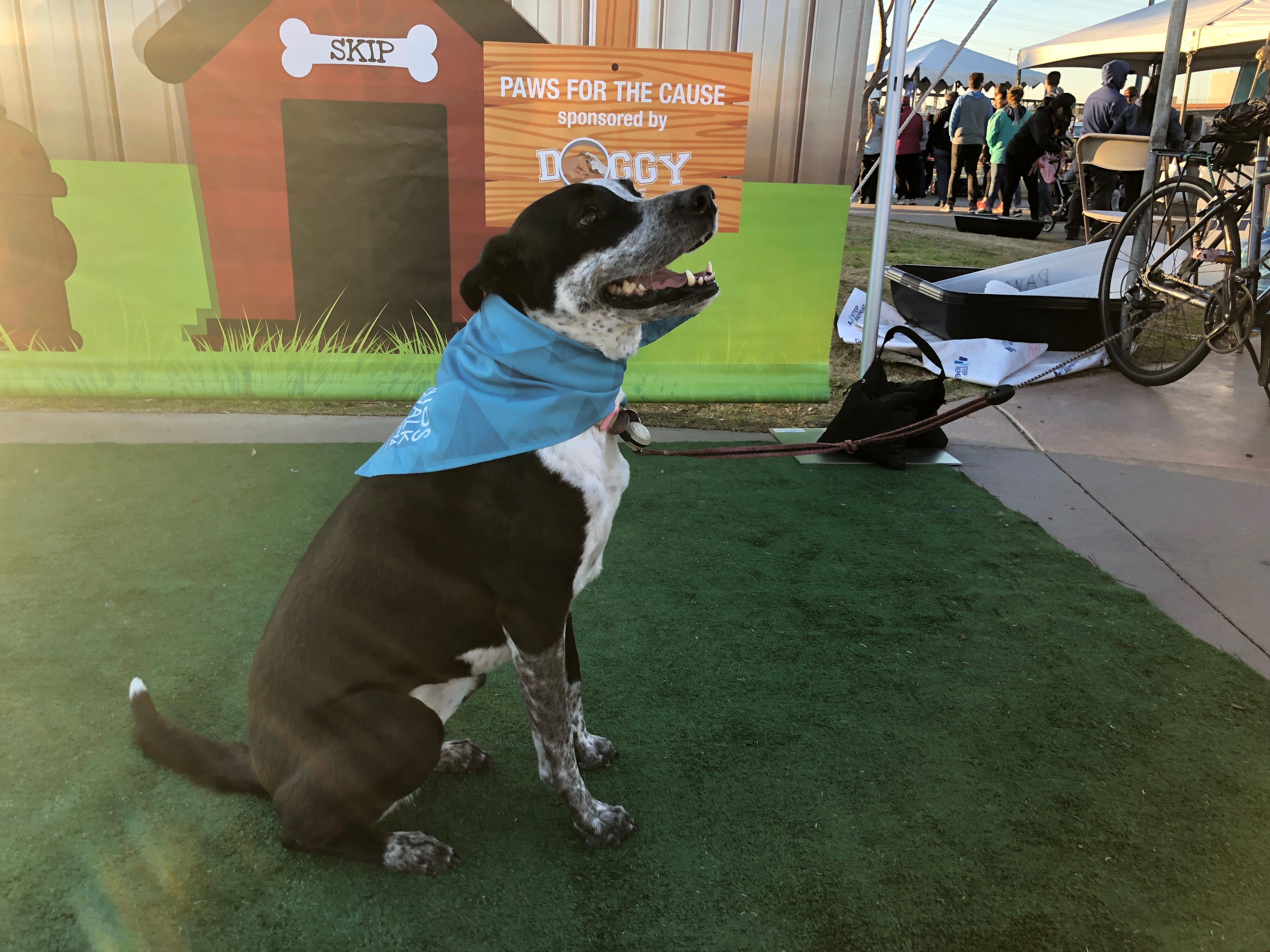 Audrey Pupburn sits for a photo outside of the Paws for the Cause stand at the AIDS Walk Arizona.