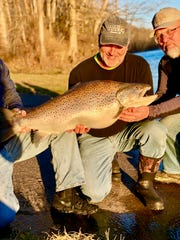 Paul Crews of Neosho holds his new Missouri record brown trout moments before releasing it at Lake Taneycomo Saturday.