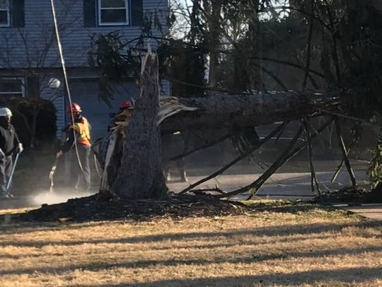 A tree falls on Orchard Lare  in Cherry Hill.