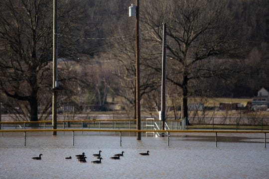 Geese float in the flooded outfield of a baseball field off Humbert Avenue in the East End on Monday, Feb. 25, 2019.