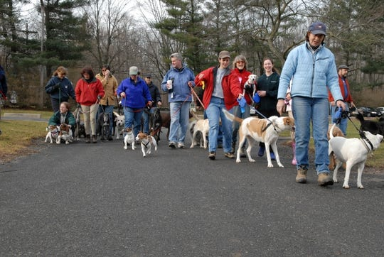 Dog walks are held on the trails at Lord Stirling Stable, 256 South Maple Ave. in the Basking Ridge section of Bernards every Saturday morning.