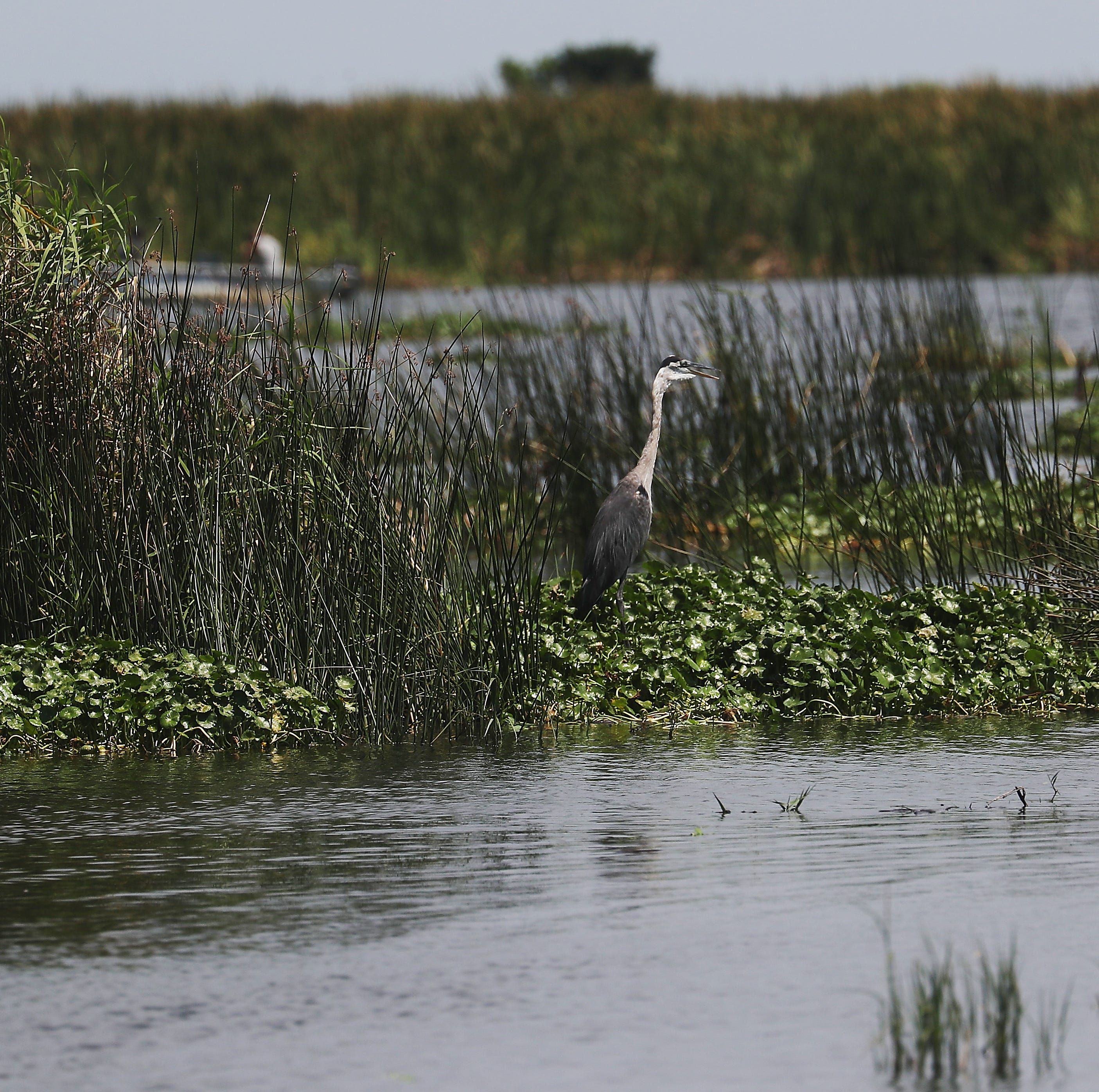 With Trump visit on the horizon, here are five things you should know about Lake Okeechobee