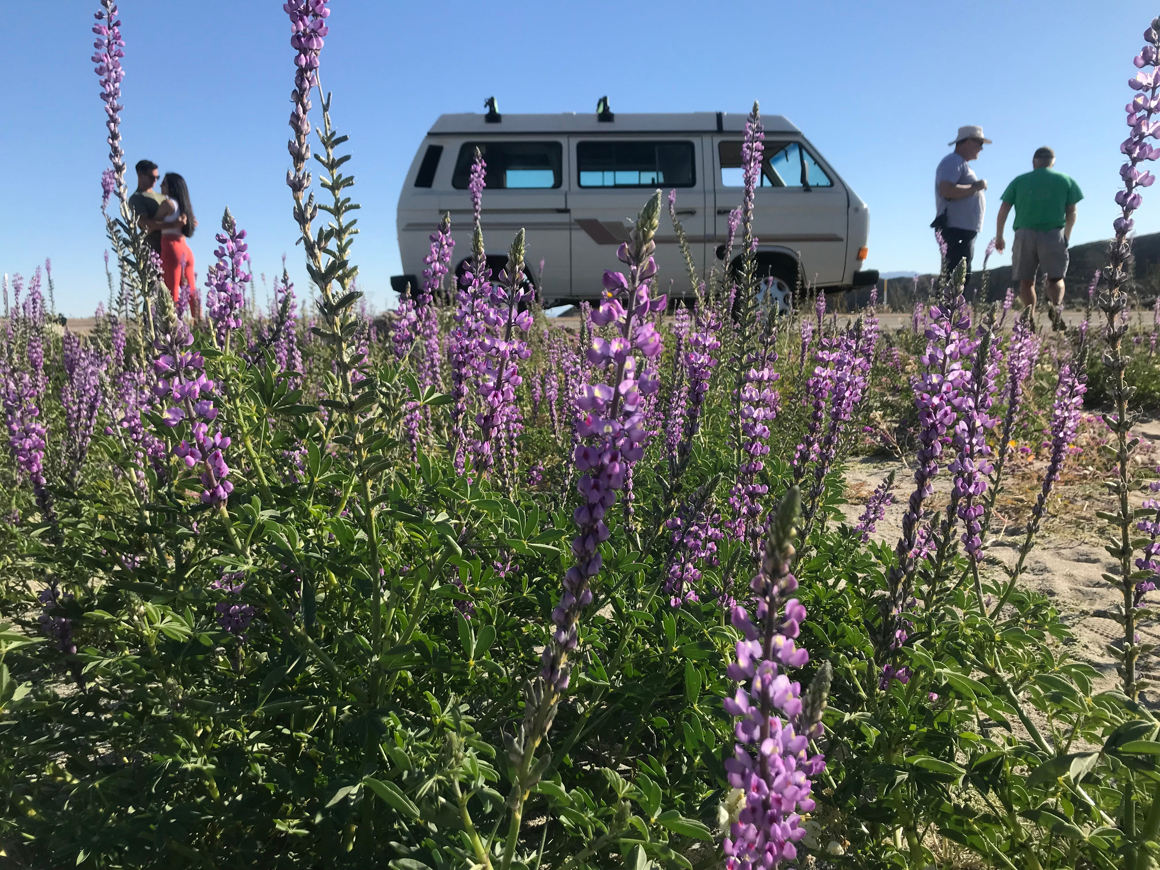 People stop along San Diego County Highway S-22, near mile marker 35, to take photos of the wildflowers on February 24, 2019.