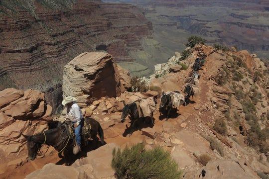 Turistas pueden optar por descender y ascender el Gran Cañón en mula.