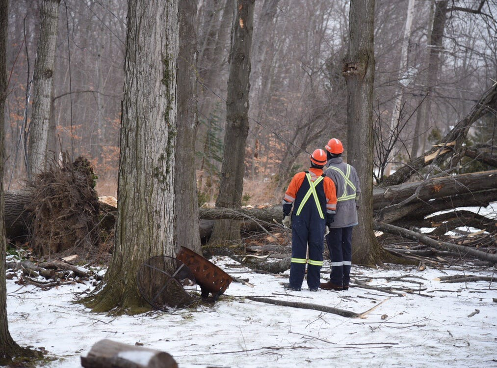 Crews checking out a fallen tree in Webster