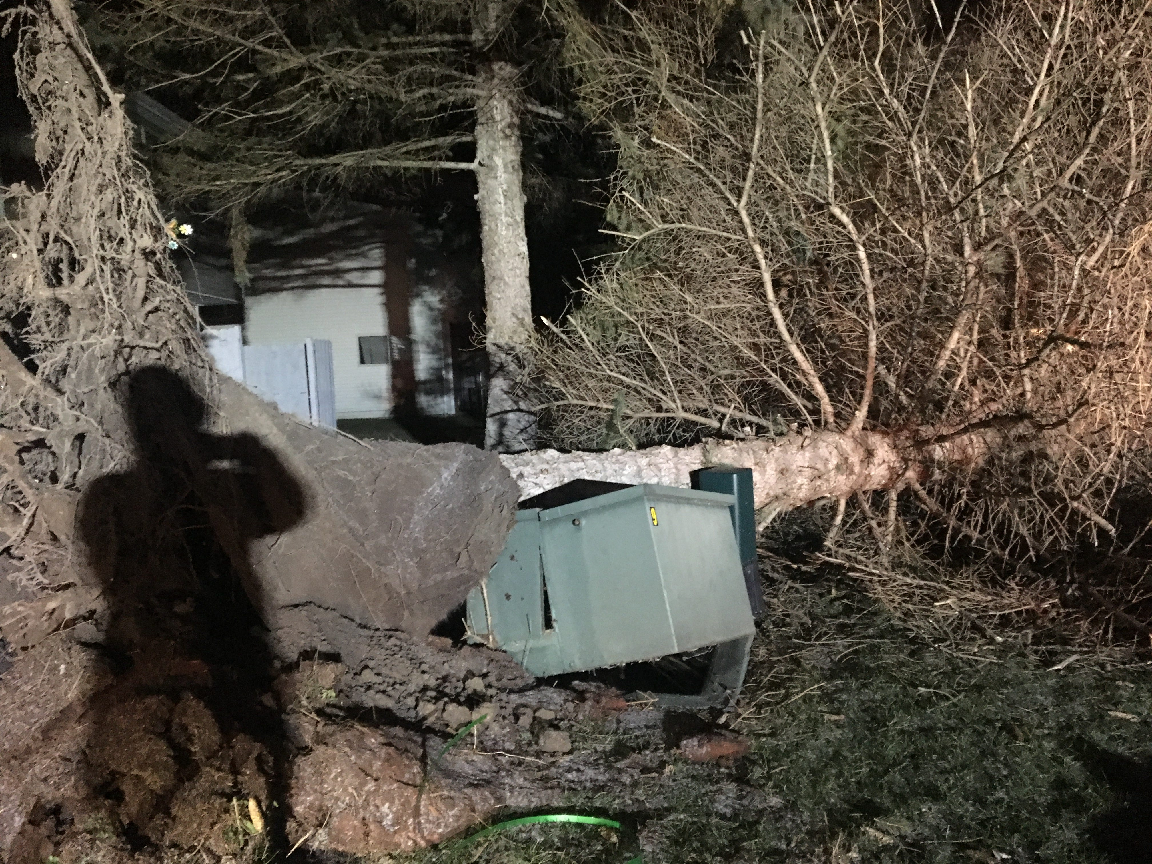 A pine tree landed on a transformer on Powers Lane in Chili on Feb. 24, 2019.