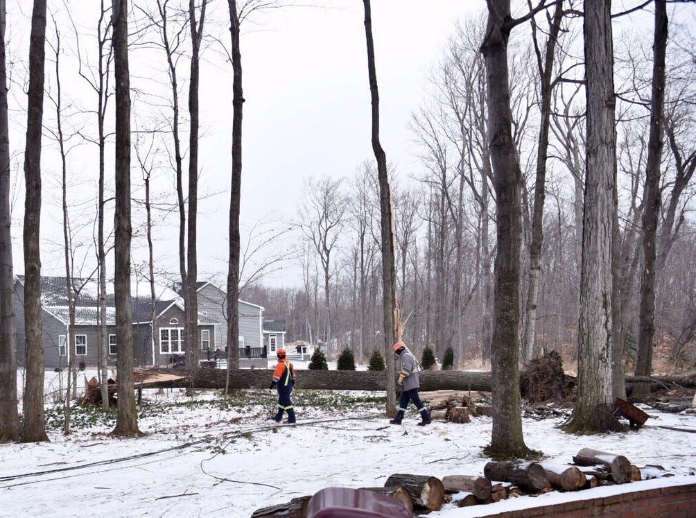 Crews check out fallen tree on Coleman Circle in Webster