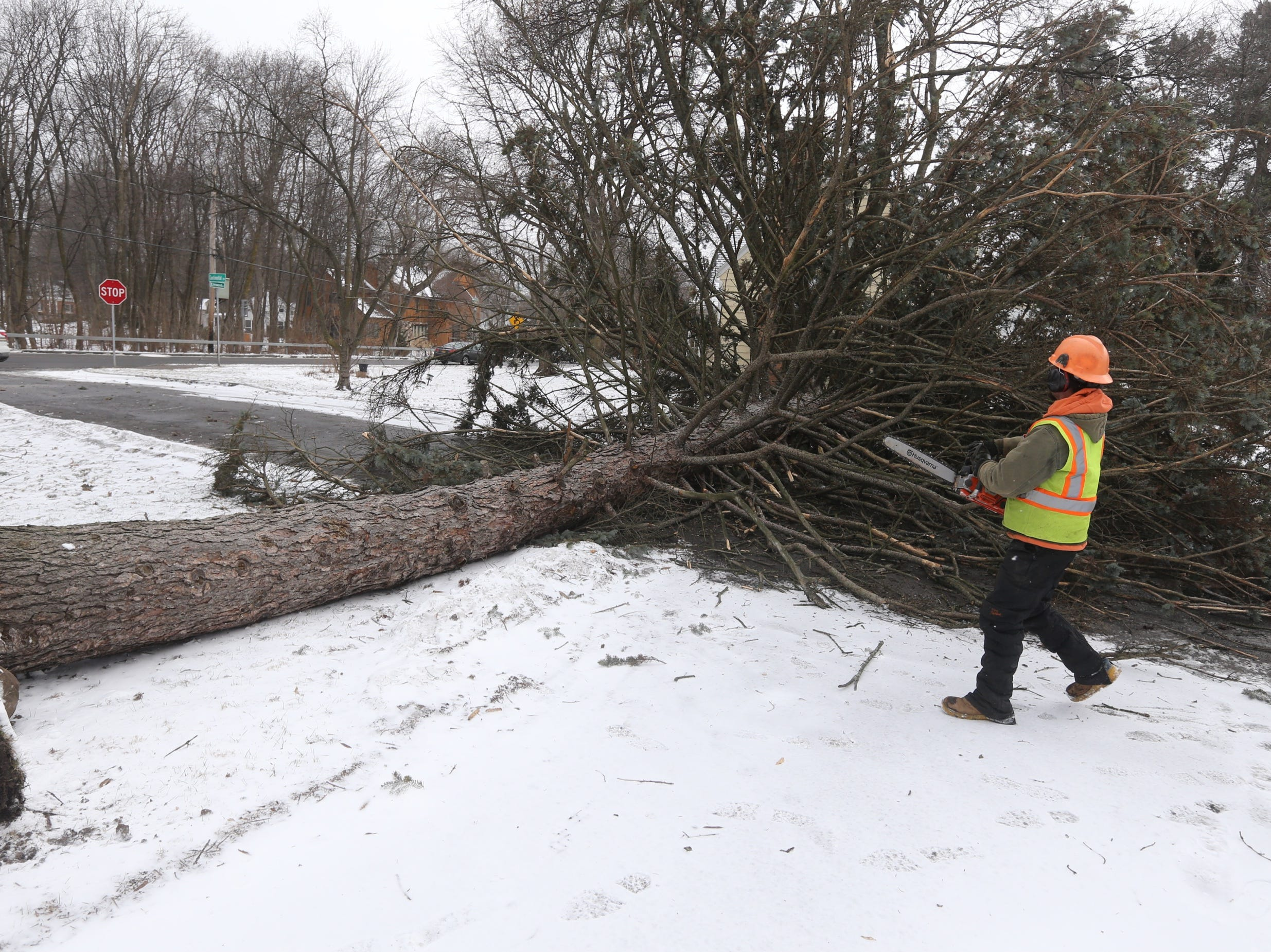 Tree down across Continental Drive in Brighton