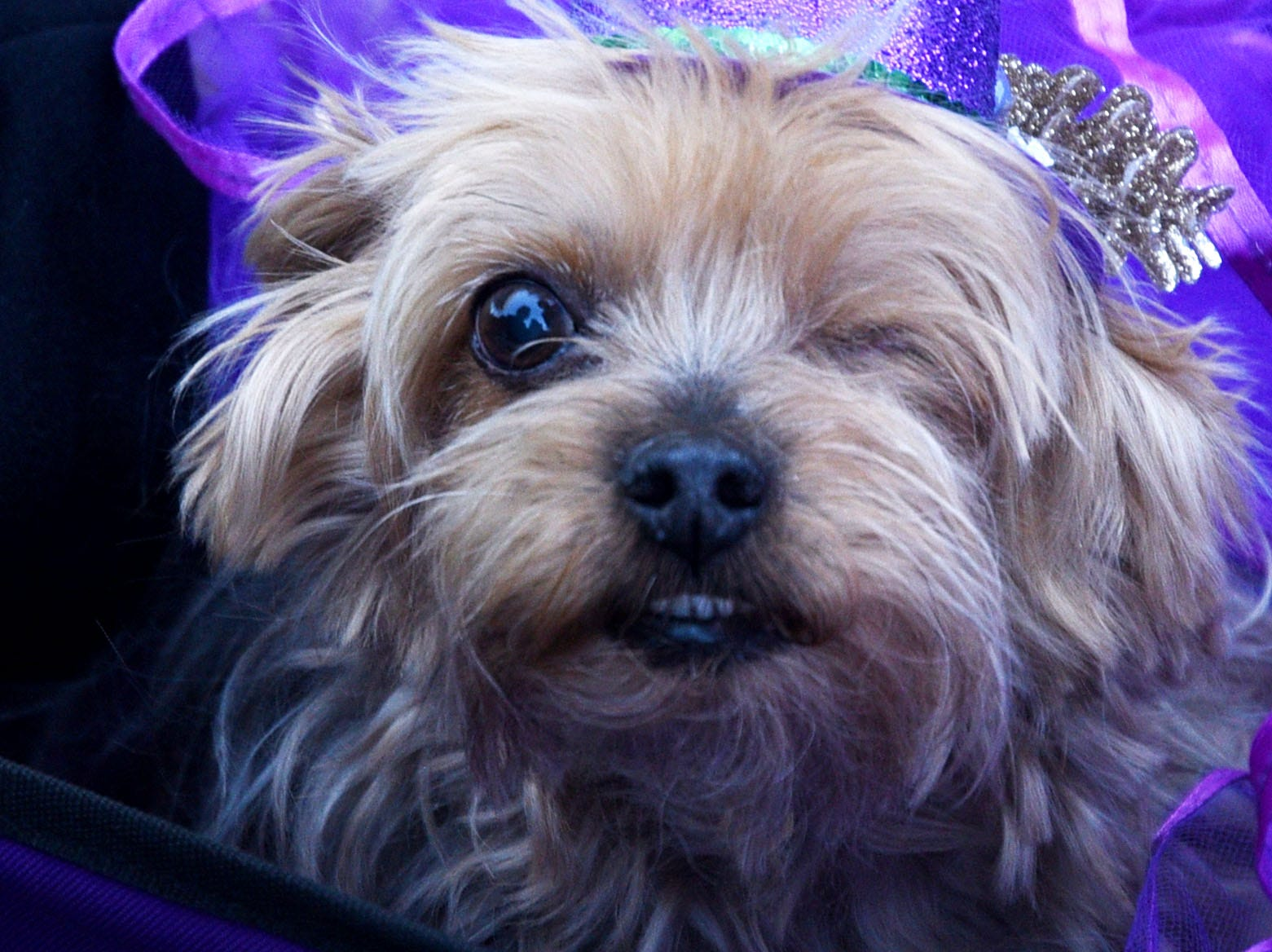Barkus and Meoux Parade 2019 Sunday February 24, 2019 at Reeves Marine in Bossier City.