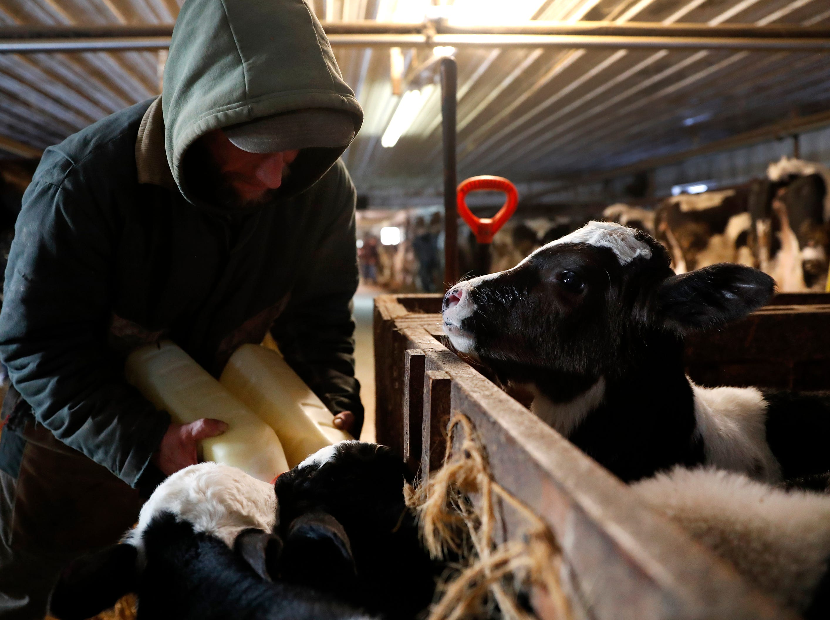 Steve Rieckmann, son of John Rieckmann, feeds calves at his father's dairy farm Wednesday Feb. 13, 2019, in Fremont, Wis.Danny Damiani/USA TODAY NETWORK-Wisconsin