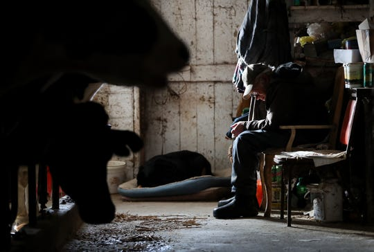 John Rieckmann, 79, takes a break from daily chores in his dairy farm's barn Wednesday Feb. 13, 2019, in Fremont, Wis. Rieckmann and his wife Mary are struggling to make ends meet and have started a GoFundMe Campaign to help raise to support their farm.