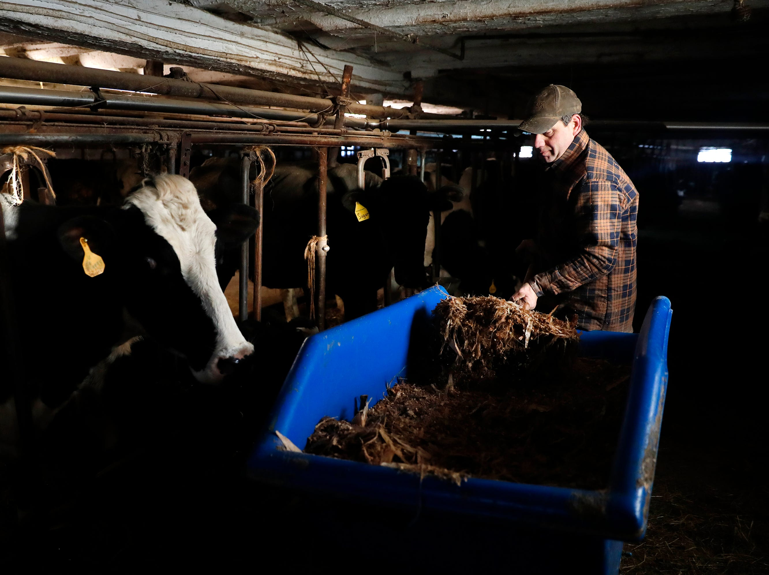 Russell Rieckmann, son of farm owner John Rieckmann, feeds their cows before milking Wednesday Feb. 13, 2019, in Fremont, Wis.Danny Damiani/USA TODAY NETWORK-Wisconsin