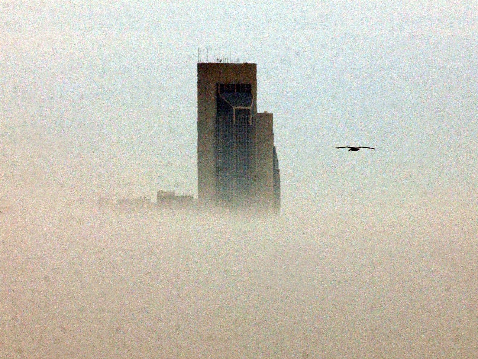 A lone pelican flying over Corpus Christi Bay, looking like he is heading toward One Shoreline Plaza building which is sticking up out of the heavy fog which was over the downtown area on Dec. 3, 2002.