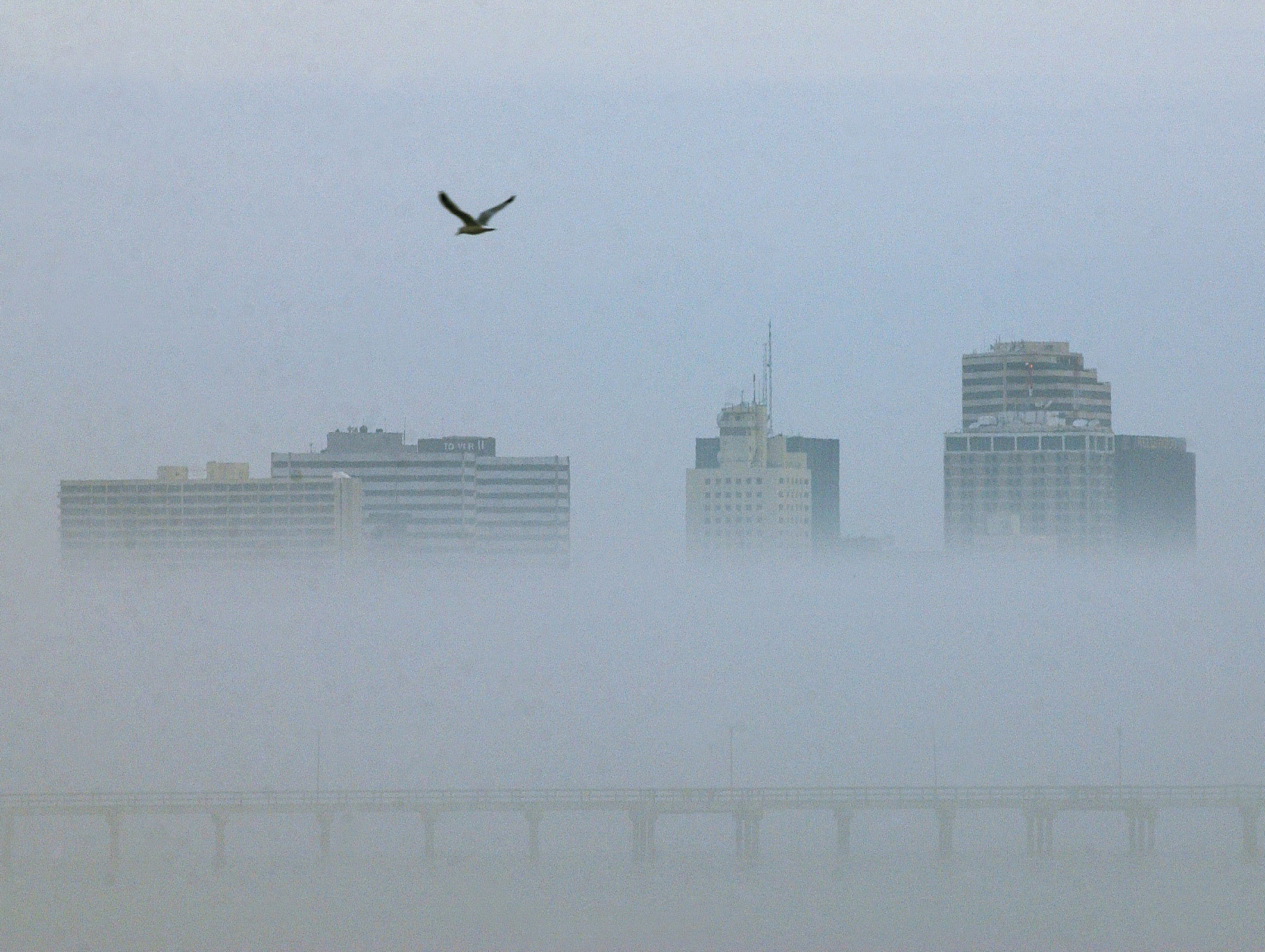 A gull flying over Corpus Christi Bay, in the heavy fog which was over the downtown area Dec. 3, 2002.