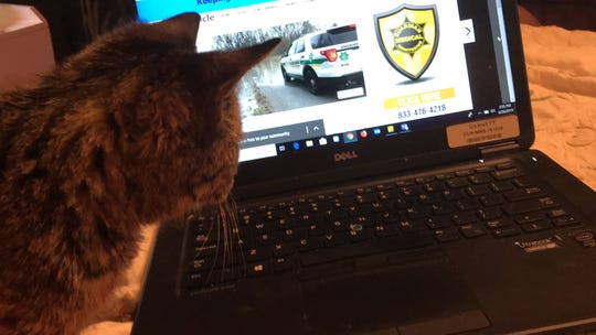 Prince at my laptop. A story of the sudden flood that almost caught up to my car is in the background.
