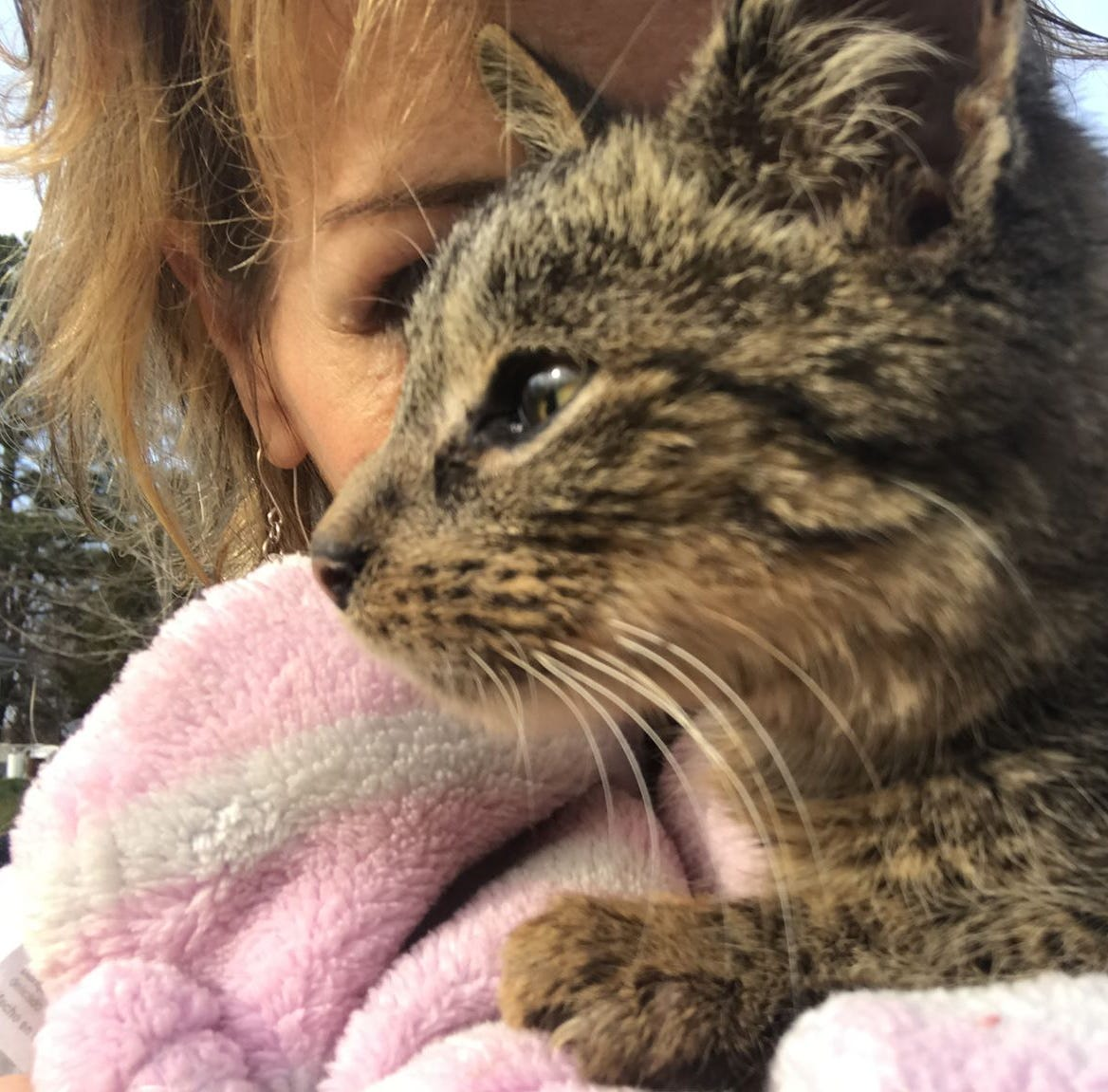 Kitten rescued from floods gets second chance but has difficult journey ahead