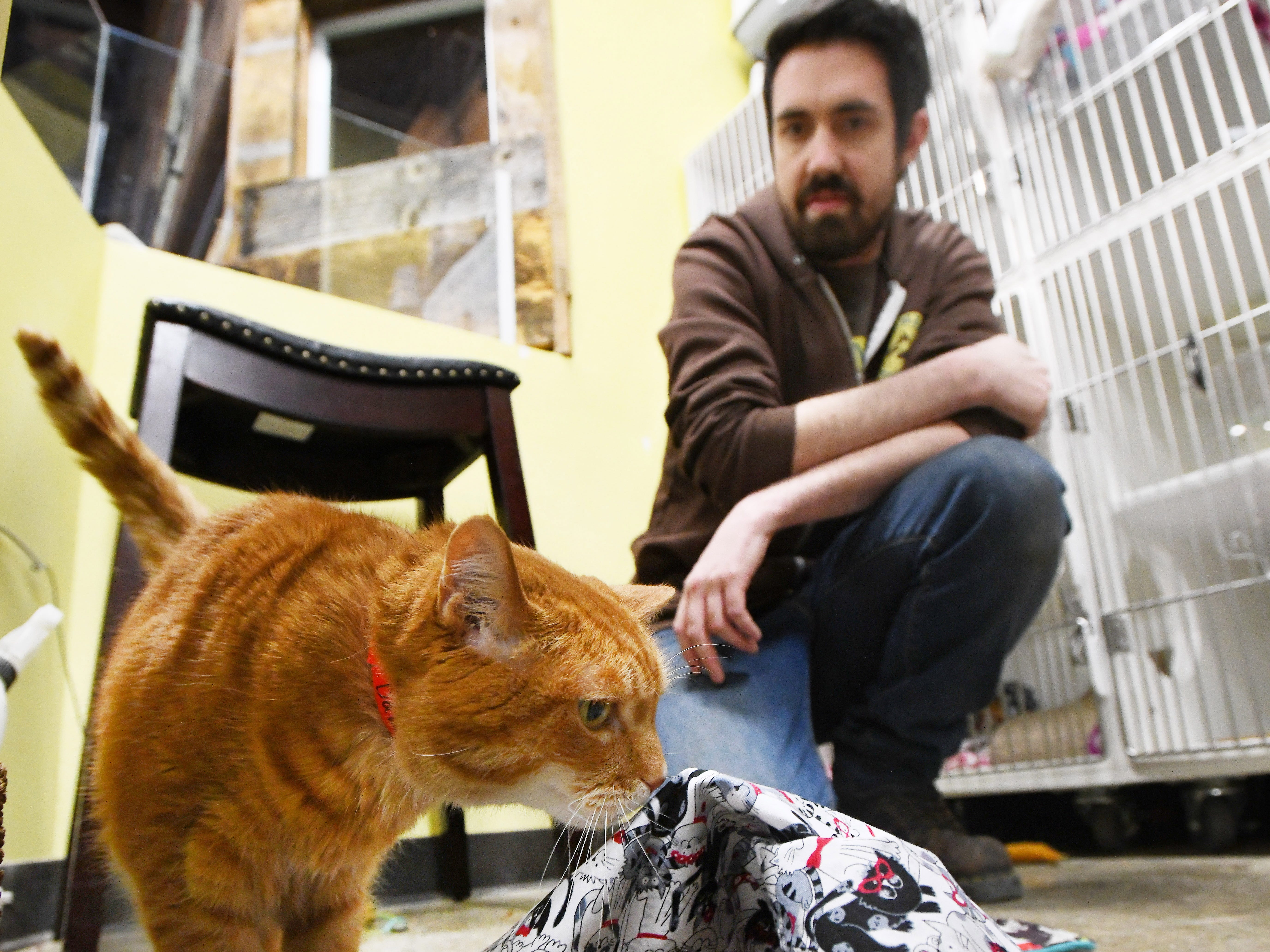 Handmade: Cat blankets have 'sweet smell of success'