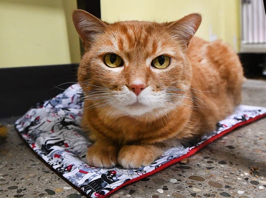 Dakota, the cat, sits on one of Jesse Roberts' catnip blankets at Premier Pet Supply in Beverly Hills, Michigan on February 25, 2019.