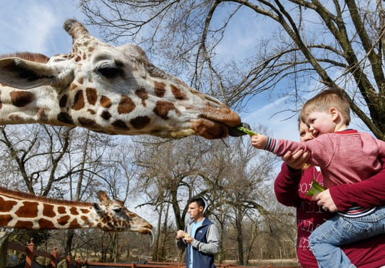 Warren Scott, two years-old, helps his mother Emily Scott and zoo worker  Gavin Williamson feed lettuce leaves to Kia and Kizzie two of the giraffes at Evansville's Mesker Park Zoo Tuesday, February 26, 2019