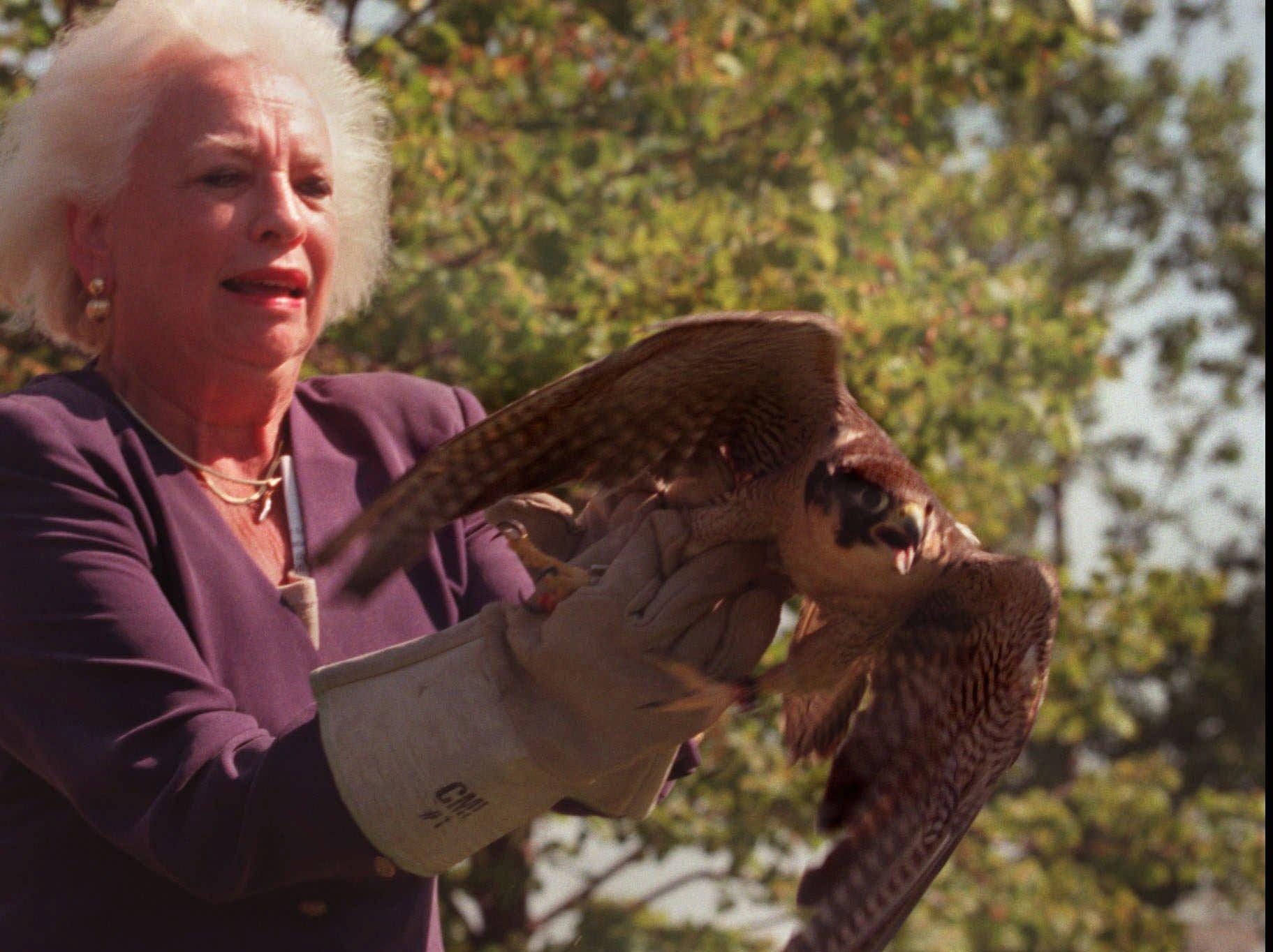 U.S. Treasurer Mary Ellen Withrow releases a peregrine to coincide with the removal of the bird from the endangered species list Tuesday Aug. 25, 1998 in Minneapolis, Minn. Withrow released Harriet, who produced at least a dozen offspring after finding a mate in Chicago. Harriet was found with a broken wing in January and has been healing at the Raptor center.