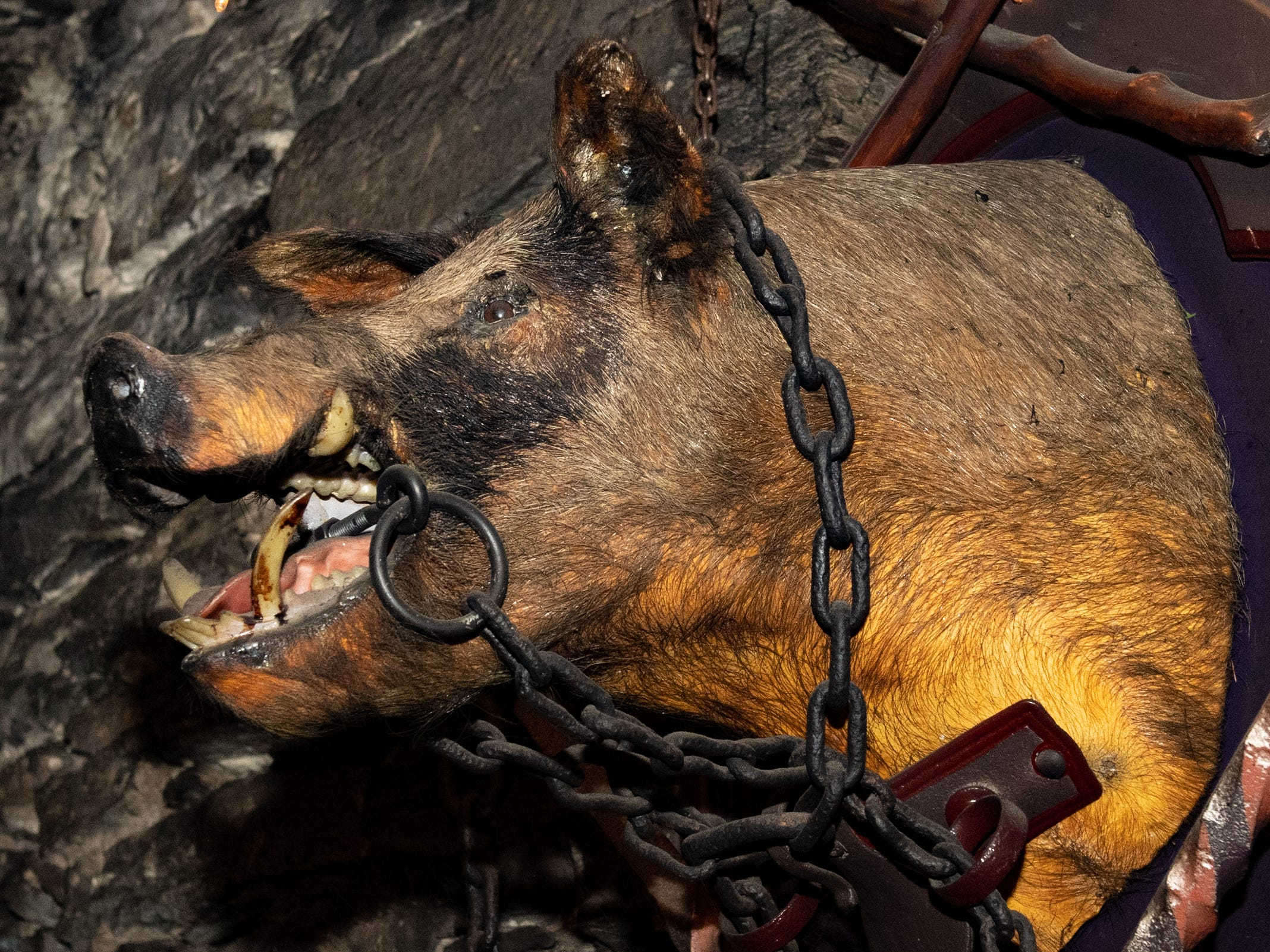 A boar head at the front of the room watches as customers enjoy their meals in the Catacombs, February 22, 2019.