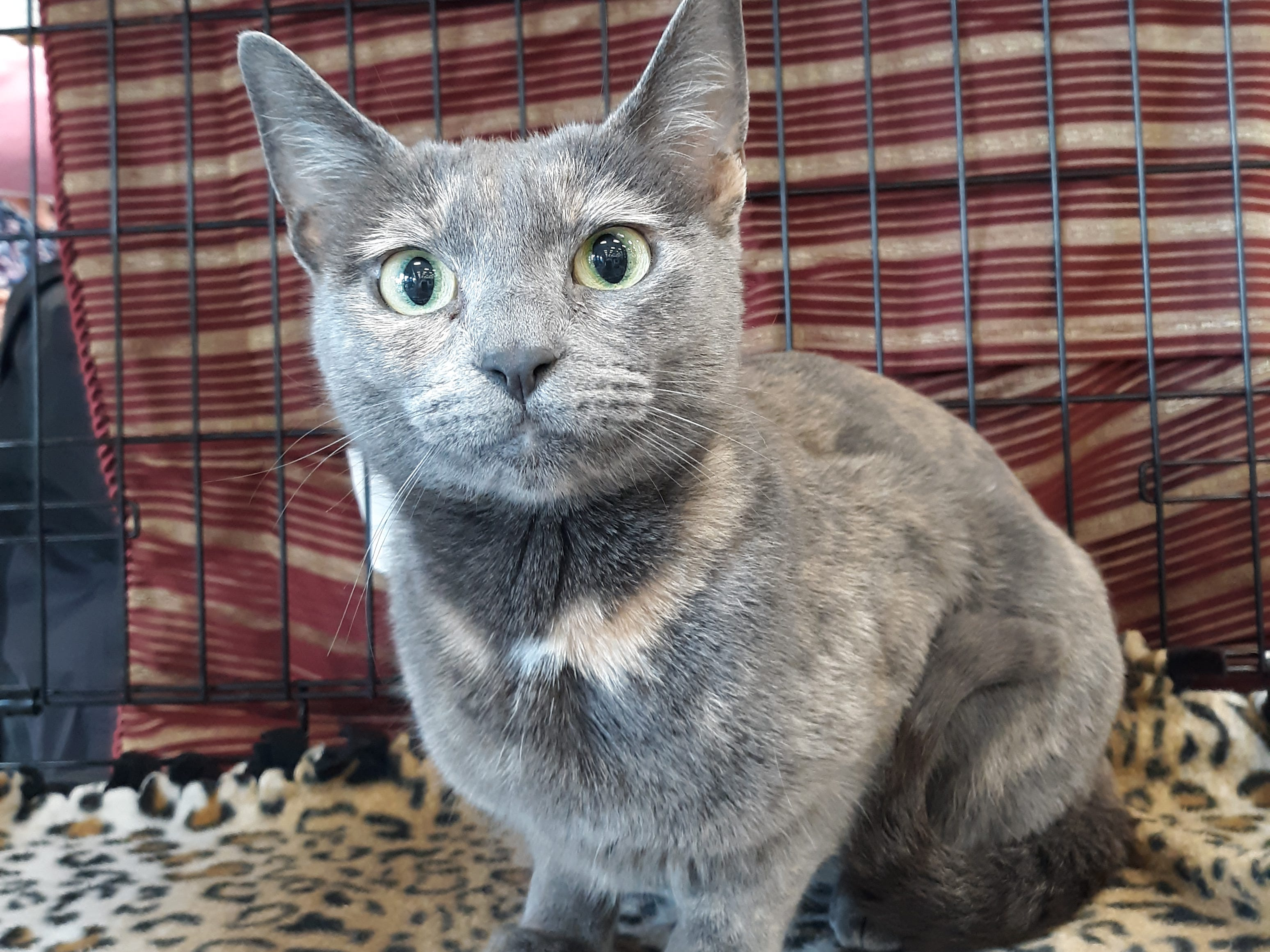Octavia is a 1-year-old, female kitty who has beautiful diluted tortoiseshell markings. She's spayed, vetted and current on vaccines. All animal adoptions include spaying or neutering and vaccinations. Apply with Another Chance Animal Welfare League at www.acawl.org. Call 356-0698.