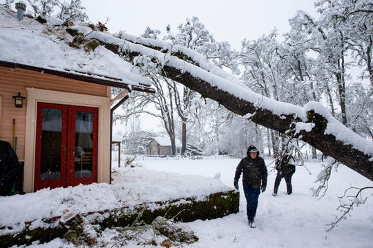 Bobby Roberts walks under tree that fell on a house on North 6th Street in Creswell, Ore., Monday, Feb. 25, 2019,  after a heavy snow blanketed the Willamette Valley. He and a group of other volunteers were helping to remove the tree for the owner who was out of town when the storm hit.