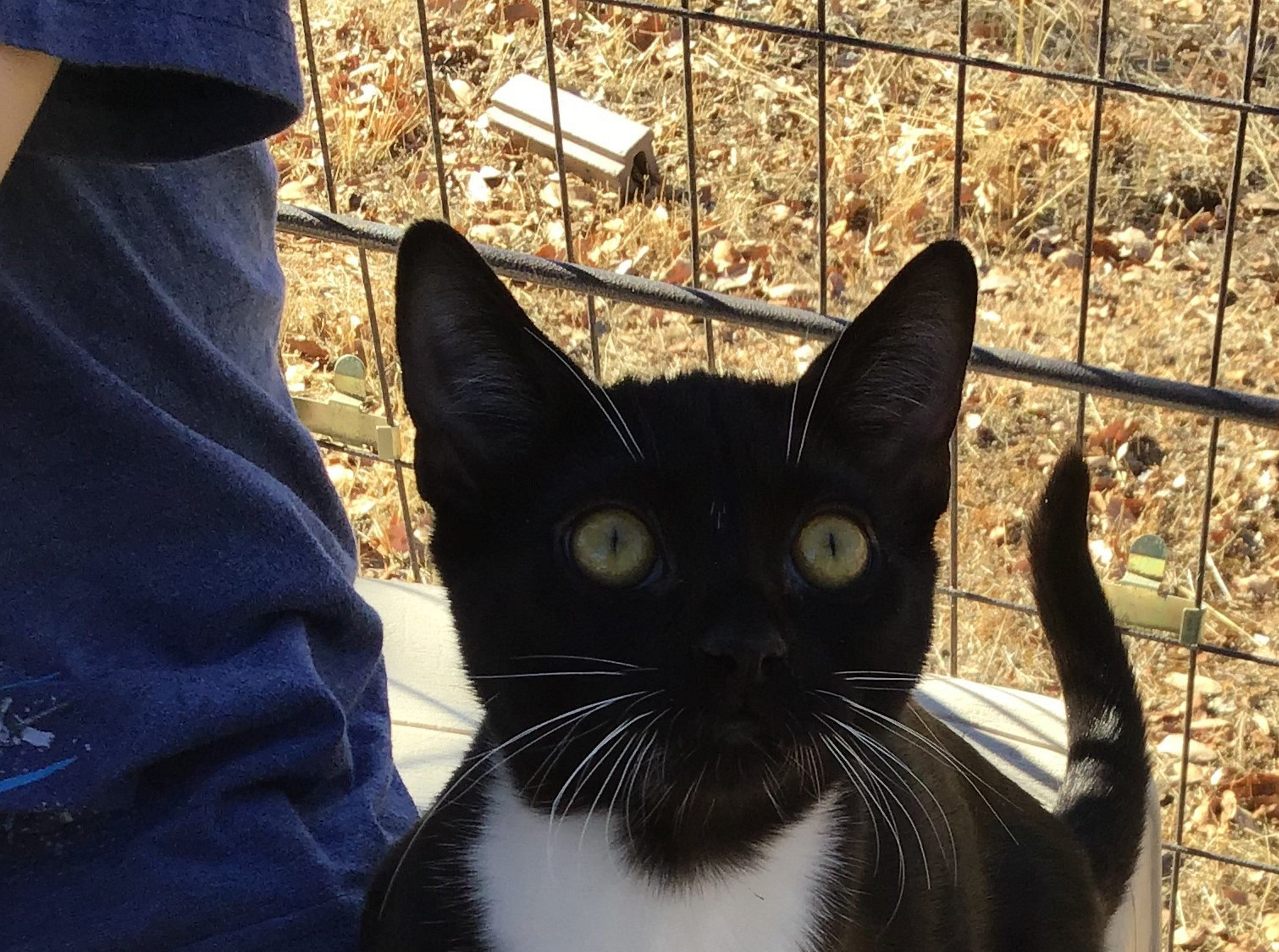 Espresso is a sweet, 9-month-old female kitten who's friendly and playful. She's a little shy when meeting new people, but once she's comfortable she really shines. Her fur is bunny-soft. Raining Cats N Dogs adoptions include spay/neuter services, vaccines and vetting as needed. Call 232-6299. Go to http://rainingcatsndogs.rescuegroups.org.